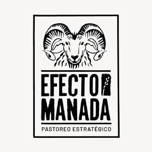 EFECTO MANADA